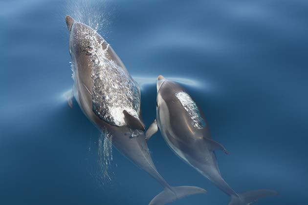 Granada, residencia de delfines