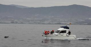 Avistamiento científico cetáceos en el Litoral Granadino